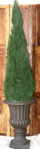 Preserved Cone Topiary 96 inch in Juniper Foliage